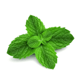 ingredient-mint